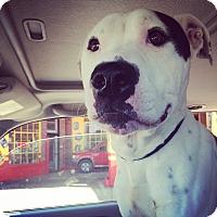 Adopt A Pet :: Loch - Chicago, IL