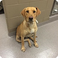 Adopt A Pet :: Stella Y - Cumming, GA