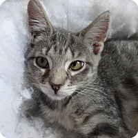Adopt A Pet :: Tabitha - Colmar, PA