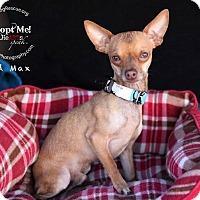 Adopt A Pet :: Mad Max - Shawnee Mission, KS