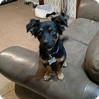 Adopt A Pet :: Furby - Las Cruces, NM