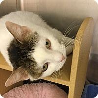Adopt A Pet :: Gracie - Colmar, PA