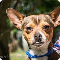 Adopt A Pet :: Taco - Daleville, AL