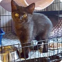 Adopt A Pet :: Lizzy - Colmar, PA