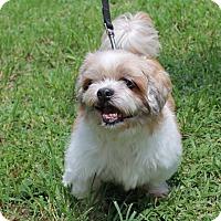 Adopt A Pet :: Buster - Boca Raton, FL