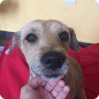 Adopt A Pet :: Nicholas - Toronto, ON
