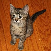 Adopt A Pet :: Astra - Apex, NC