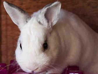 Other/Unknown for adoption in Lompoc, California - CHARLIE