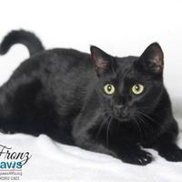 Adopt A Pet :: Fronz - Belle Chasse, LA