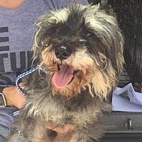Adopt A Pet :: Randy (Courtesy) - Asheville, NC