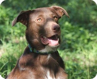 Border Collie Mix Dog for adoption in Austin, Texas - Murphy Brown