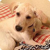 Adopt A Pet :: Rebecca - Denver, CO