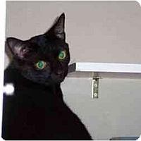 Adopt A Pet :: Fred Weasley - Secaucus, NJ