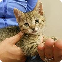 Adopt A Pet :: Emme - Reston, VA