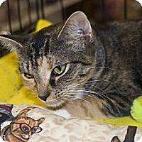 Adopt A Pet :: Huny Buny - New Port Richey, FL