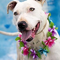 Adopt A Pet :: Casper - Acton, CA