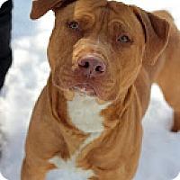 Adopt A Pet :: Roscoe - Tinton Falls, NJ