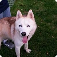 Adopt A Pet :: Timber - Oakland, MI