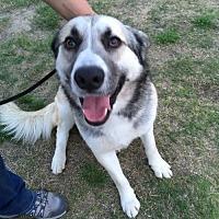 Adopt A Pet :: Wyatt - Fresno, CA