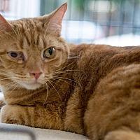 Adopt A Pet :: Cane - New York, NY