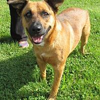 Adopt A Pet :: Anita - Reeds Spring, MO