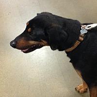 Adopt A Pet :: Dallas - Omaha, NE