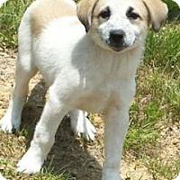 Adopt A Pet :: Barney - Oswego, IL