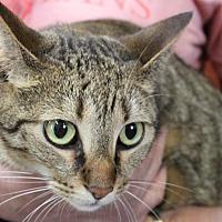 Adopt A Pet :: Sprinkles - Sarasota, FL