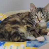 Adopt A Pet :: Joanie - Westville, IN