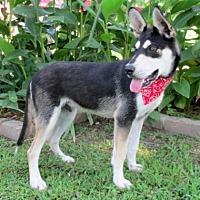 Adopt A Pet :: Apollo - Tyler, TX