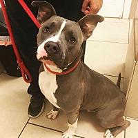 Adopt A Pet :: Yvonne - Marietta, GA