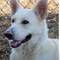 Adopt A Pet :: CANE - Red Bluff, CA
