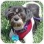 Photo 1 - Shih Tzu Mix Dog for adoption in Los Angeles, California - Domino