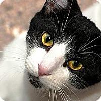 Adopt A Pet :: Mick Jagger - Lombard, IL