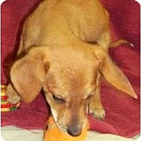 Adopt A Pet :: Dansby Reduced - Allentown, PA
