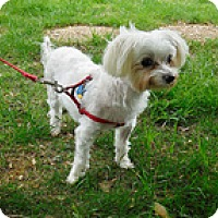 Adopt A Pet :: Truman - Wilmington, MA