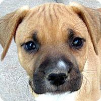 Adopt A Pet :: Baby Essie - Oakley, CA