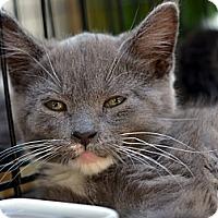 Adopt A Pet :: Merry Jerry - Brooklyn, NY