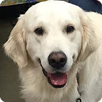 Adopt A Pet :: Chowder - Orlando, FL