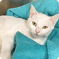Adopt A Pet :: Duchess - loves to play! - Salisbury, MA