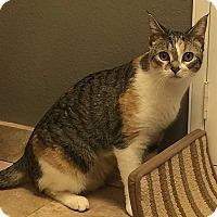 Adopt A Pet :: Henni-Pennies - Tampa, FL