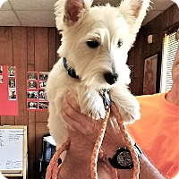 Adopt A Pet :: Sir Winston - Tavares, FL