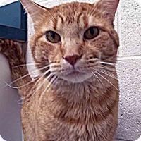 Adopt A Pet :: ADOPTED!!!   Morris - Channahon, IL