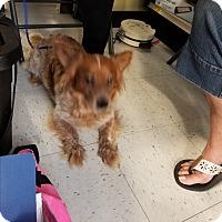 Adopt A Pet :: Hank - Brownsville, TX