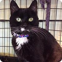 Adopt A Pet :: Allie - Breinigsville, PA
