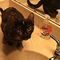 Adopt A Pet :: Hannah - Sugar Land, TX