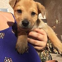 Adopt A Pet :: Hawaii - Phoenix, AZ