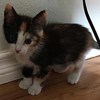 Adopt A Pet :: AUTUMN - Lakewood, CA