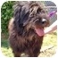 Photo 2 - Briard Mix Dog for adoption in Inman, South Carolina - Buttons
