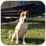Photo 1 - Boxer Mix Puppy for adoption in Baton Rouge, Louisiana - Buttercup